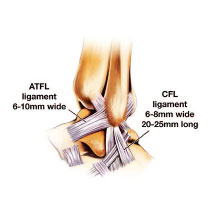 The Laterlat Ligaments